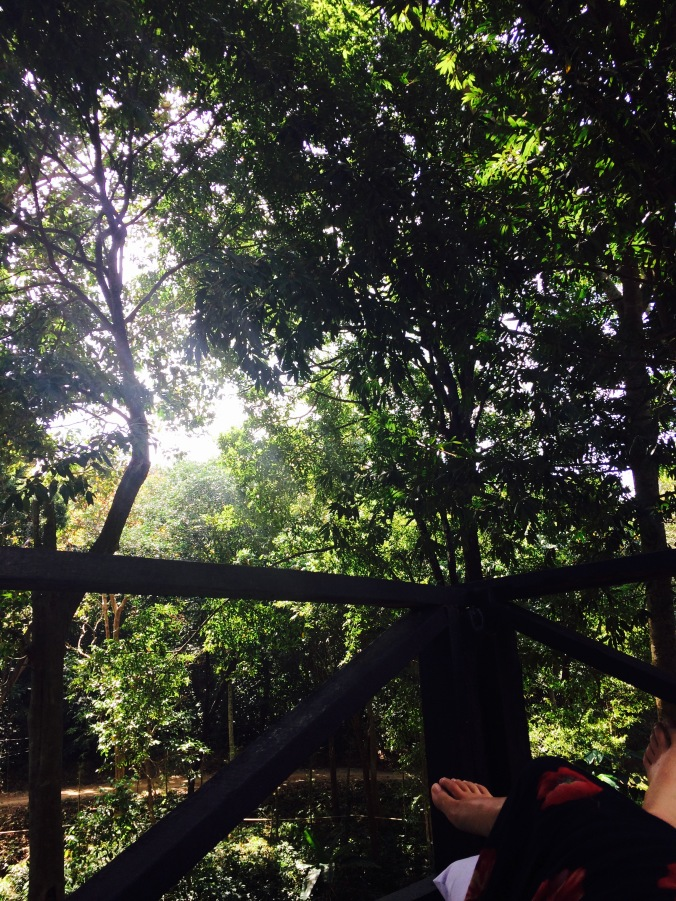 Photograph from the terrace in Ko Lanta, picturing trees and the veranda
