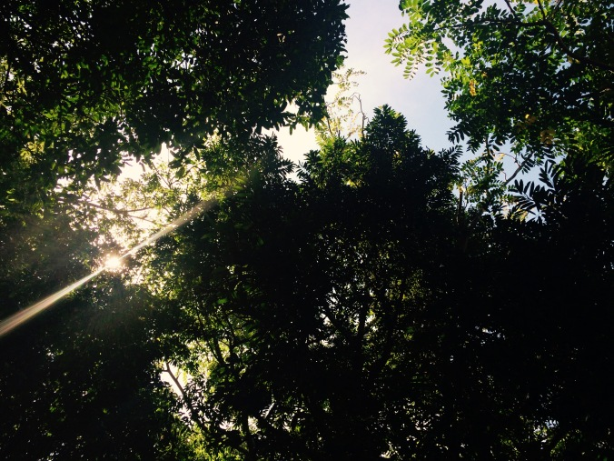 Photograph of the tree canopy in Ko Lanta, with sunlight shining through