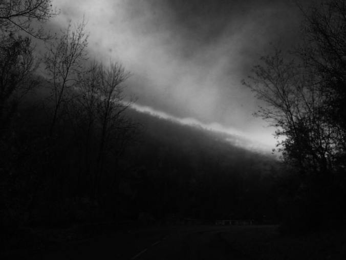 Photograph portraying a dark landscapes of trees