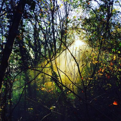 light coming through the tree